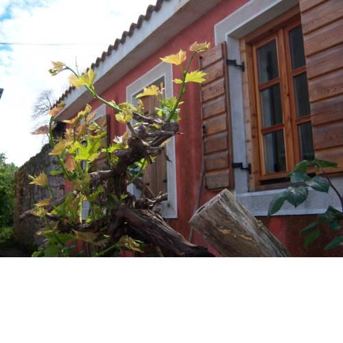 Holiday Home Stara Frajla