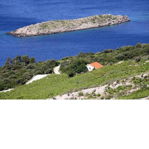 Holiday house with a parking space Dingac - Pristranj (Peljesac) - 660